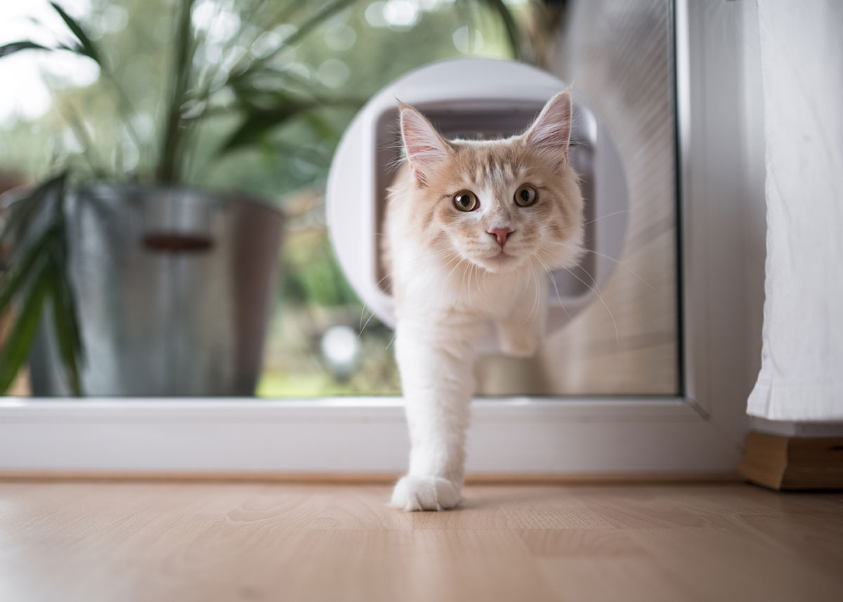 Cat Flap in Glass Doors